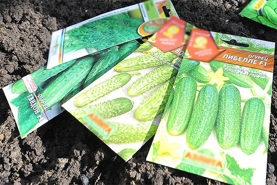 Как обезопасить себя от поддельных семян?