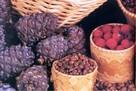 Символ Югры в праздничном меню: 3 рецепта новогодних салатов с кедровыми орешками