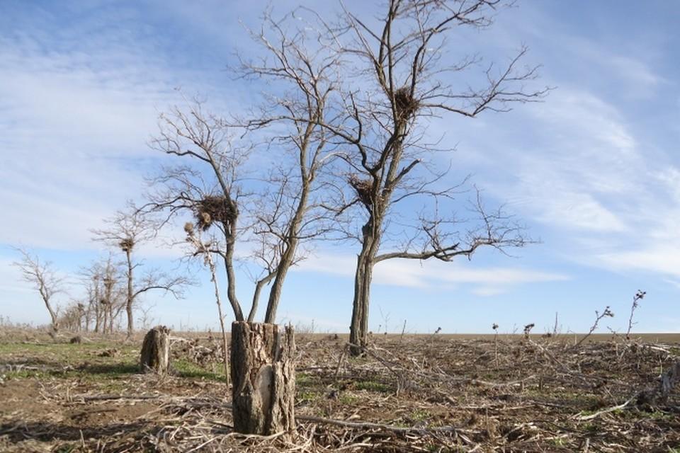 Места гнездования под угрозой. Фото: ЮНЦ РАН