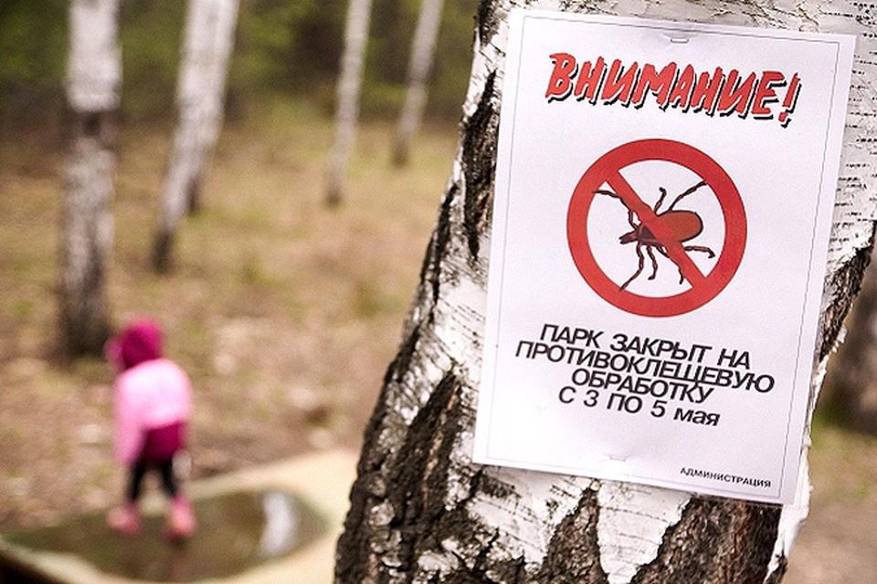 От укусов клещей на территории России уже пострадали более тысячи человек