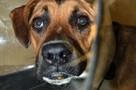 Федорино горе: в Тосно всем городом спасали раненую собаку