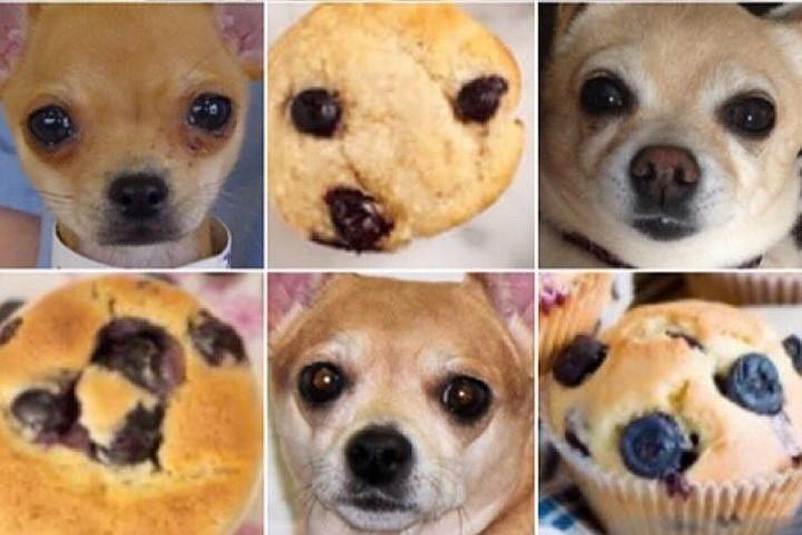 Картинки по запросу собака кекс