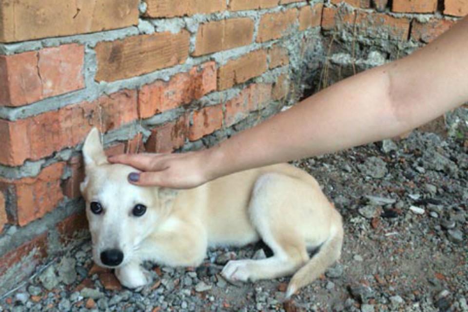 Хабаровчанки истязали собак и кошек в здании заброшенной больницы