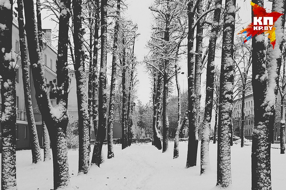 Он отвез в лес и заставил фото 330-598