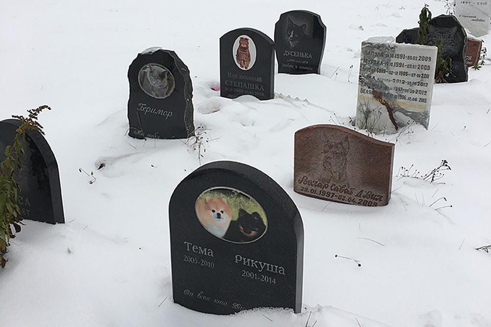 Оказалось, что в столице есть самое настоящее кладбище для домашних животных