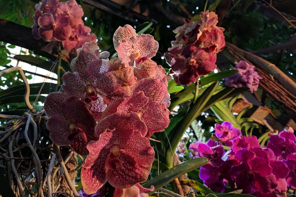 Чего боялся джеймс уилерр из дикой орхидеи