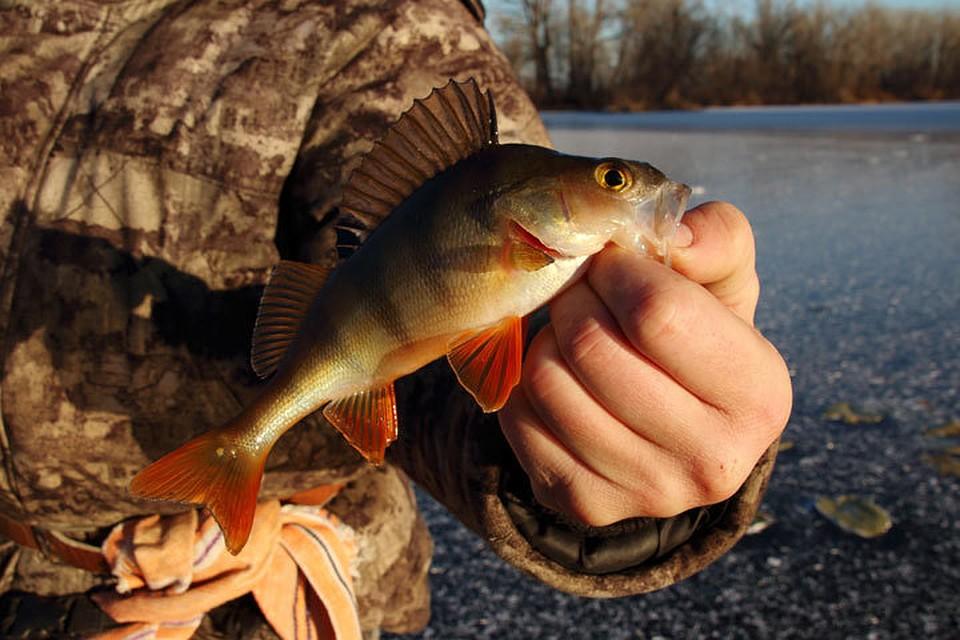 Рыбакам-любителям станут выдавать именные разрешения, а платную рыбалку отменят
