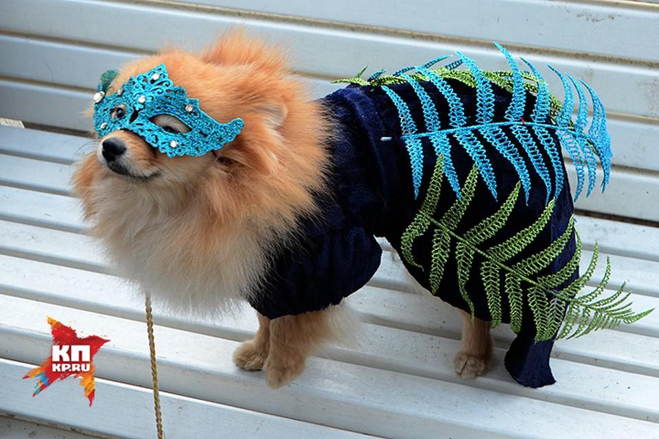 В Волгограде устроили собачий показ мод