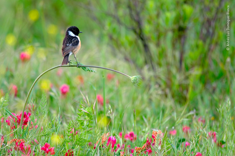 """Совершенное равновесие"" / Andrés Luis Dominguez Blanco (Испания) / Wildlife Photographer of the year"