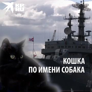 Кошка по имени Собака