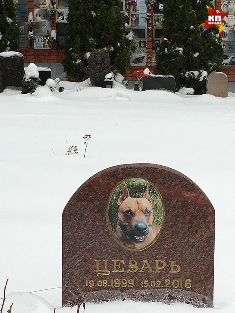 Погост в Куркино был открыт в 2007 году. Это единственное в Москве легальное кладбище домашних животных