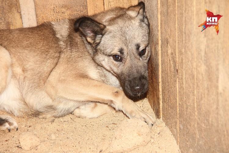 Животные настолько напуганы, что при виде человека вжимаются в стену. Фото: Игнат РОМАНОВ