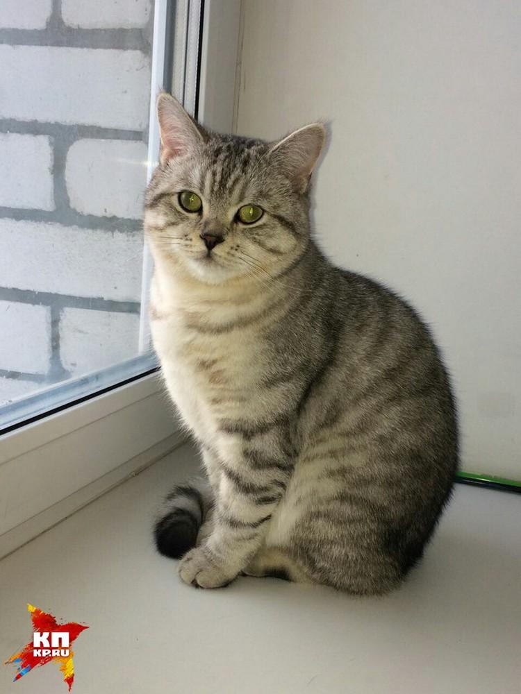 Чарли Уткинса объявили в интернете котом-колдуном и продали за 5 миллионов рублей.