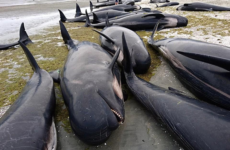 Горбатые киты фото долговечные прочные