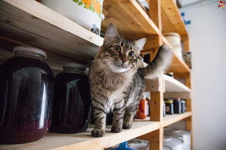 Кошка Флора ходит за матушкой по пятам и оберегает монастырские запасы.