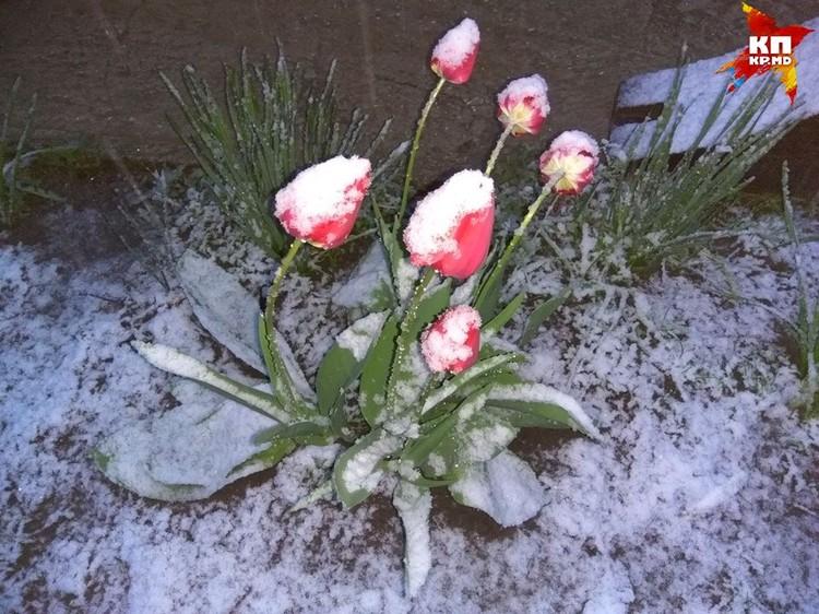 Цветы стоят в снегу