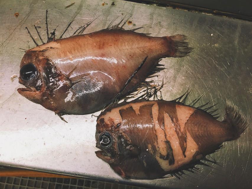 роман федорцов фото рыб данном случае