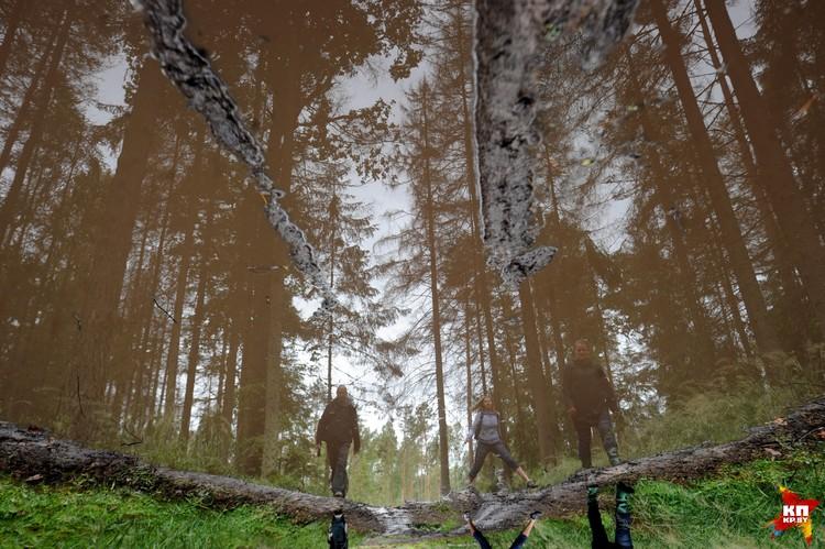 Защитники природы требуют, чтобы весь Беловежский лес стал заповедником, в котором запрещена вырубка.