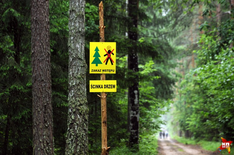 «Входить запрещено. Вырубка деревьев», - такие таблички расставлены по всей пуще.