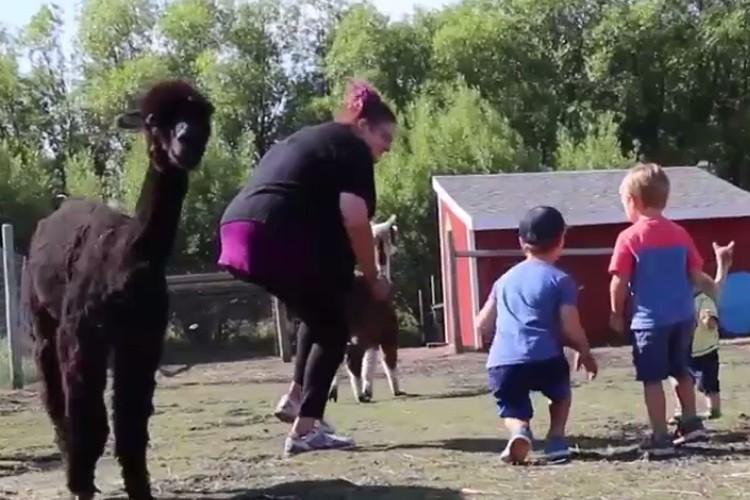Животные идею с танцами тоже оценили