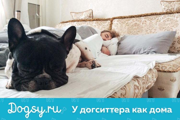 Координаты «Догси.ру» стоит держать под рукой всем, кто уже планирует новогодние поездки.