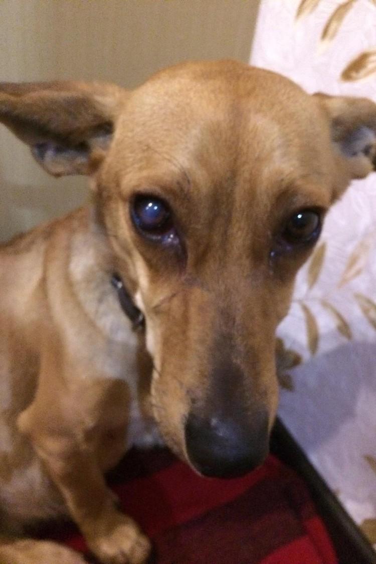 Когда Елена заглянула в плачущие глаза собаки, поняла, что больше никому и никогда не позволит обидеть это настрадавшееся животное
