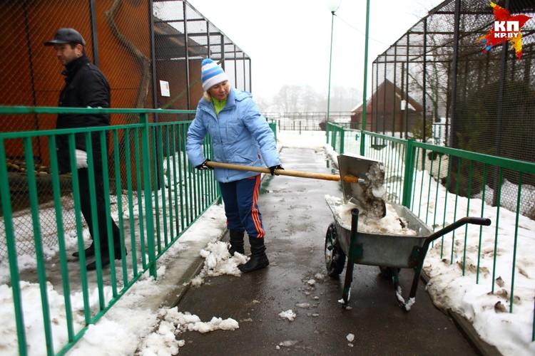 На помощь в уборке зоопарка от снега центры занятости присылают безработных