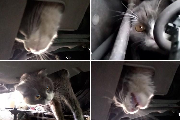 Кота находили в подвеске или под капотом