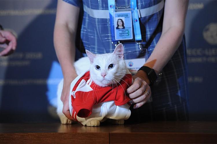 Перед публикой кот предстал в футбольной форме с номером 250: именно столько лет служат коты в Эрмитаже.