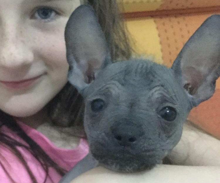 Ушастый щенок стал звездой соцсетей.