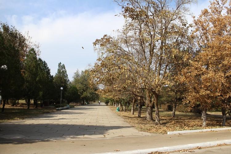 Деревья в Армянске сбрасывают листву так, будто уже глубокая осень