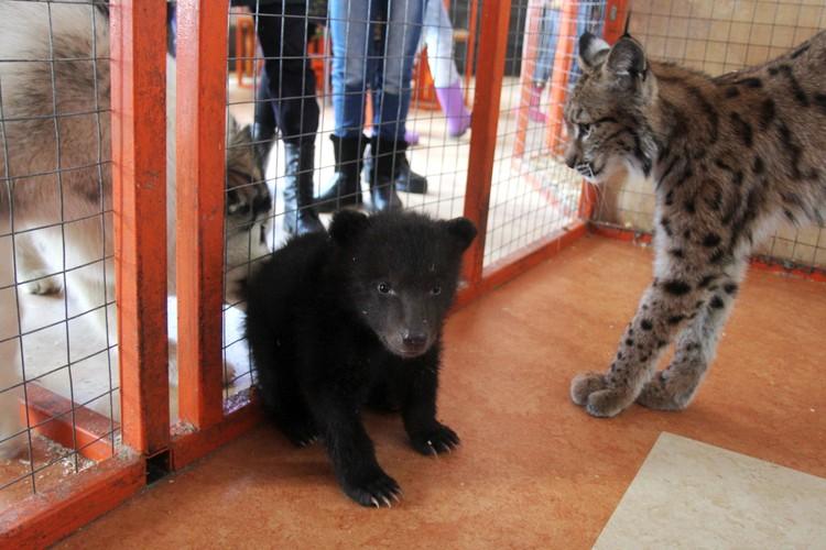 Сначала Алена воспитывала медвежат.