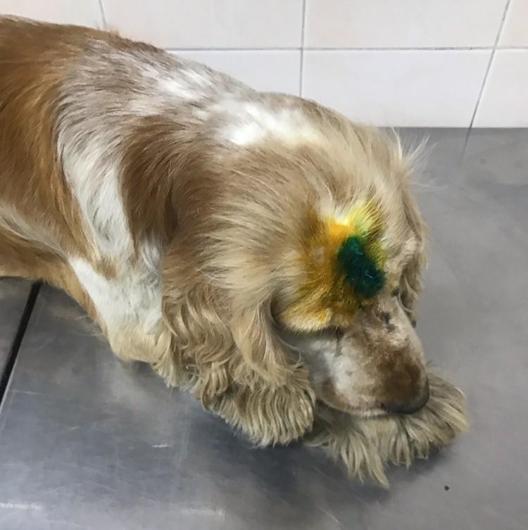 В больнице из раны пса достали осколки черепа.