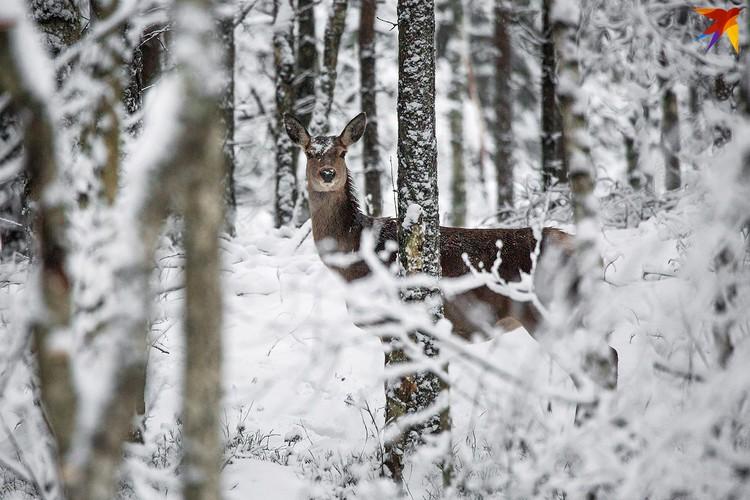 А вот и первый лесной житель.