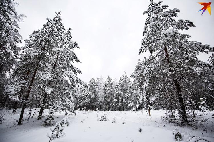Обязательно выйдите на лесную прогулку этой зимой!