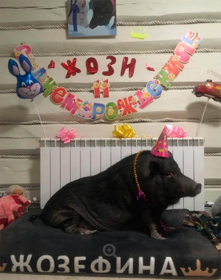 Кто-то отмечает дни рождения своих котиков, а Елизавета Родина справляет именины своей хрюшки.