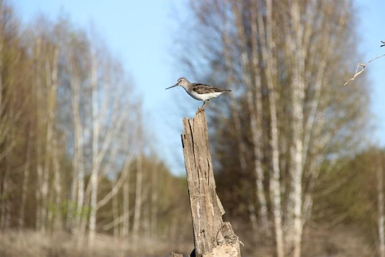 В заповеднике обитает 211 видов птиц. Этот вид, например, называется мородунка. Фото: vk.com/public_nurgush