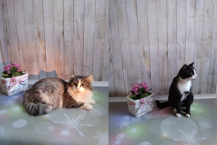 А эти кошки ищут новый дом...