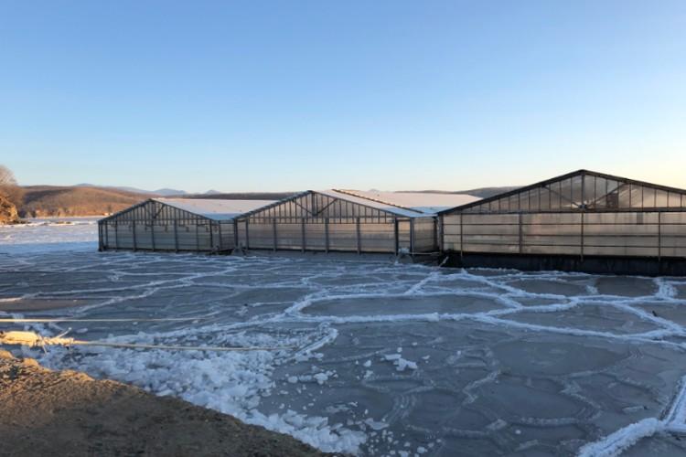 """Сама территория вольера покрыта льдом, что приводит к обморожению заключенных и, как следствие, к заболеванию морских животных. ФОТО: предоставлено """"Эковахтой"""" Сахалина."""