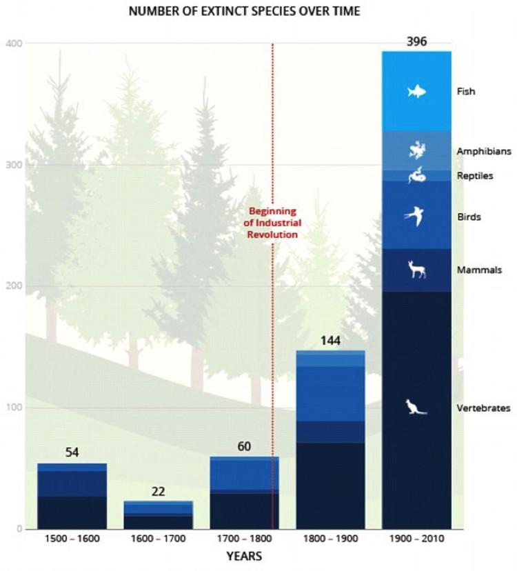 Сокращение численности видов раньше и сейчас.