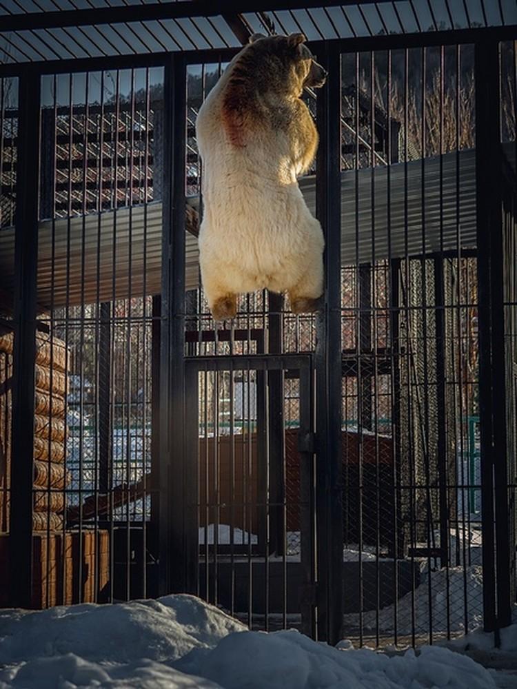 Первым делом Памир обошел свое хозяйство и заглянул к соседям. Фото пресс-службы зоопарка