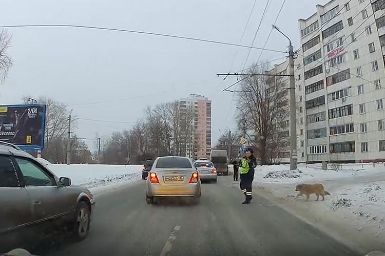 Инспектор ГИБДД предотвратил аварийную ситуацию, остановив автомобильный поток. Кадр из видео.
