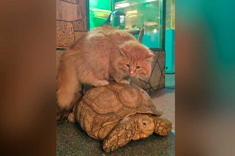 Кот-пастух Батон предотвратил побег черепах из зоопарка. Фото: Предоставлено зоогалереей Иркутска
