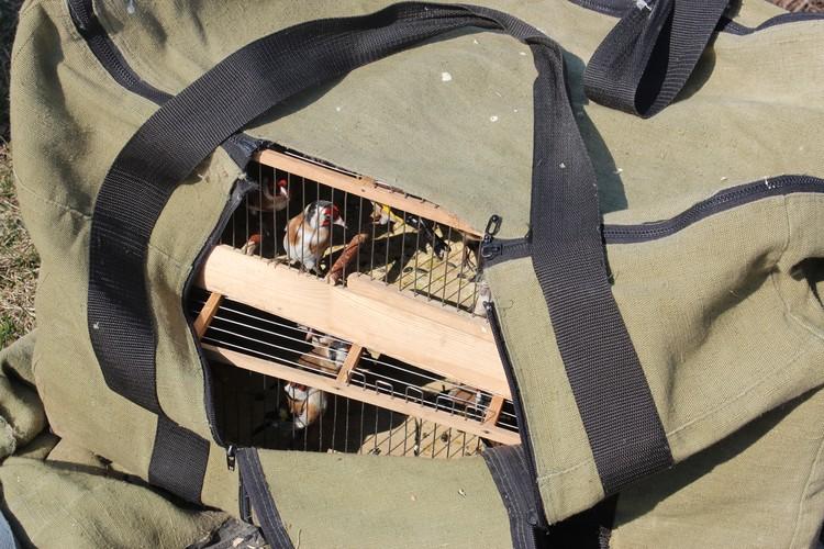 Клетки с остальными птицами спрятаны в большие сумки