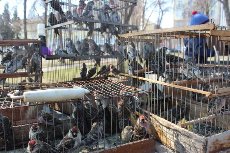 В каждой клетке несколько десятков птиц