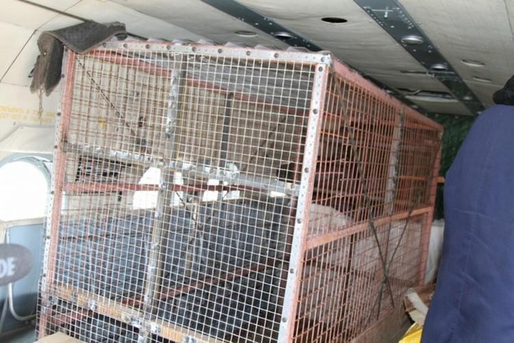 Клетку специально для медведя изготовили в Петропавловске-Камчатском