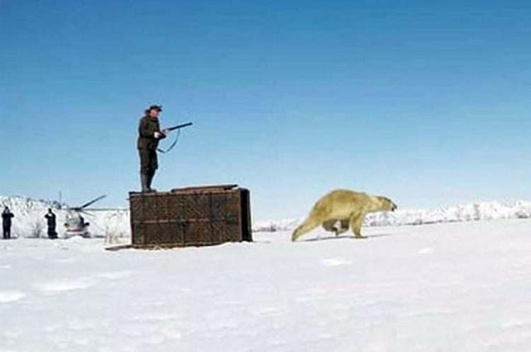 Медведя выпустили на мысе Наварин