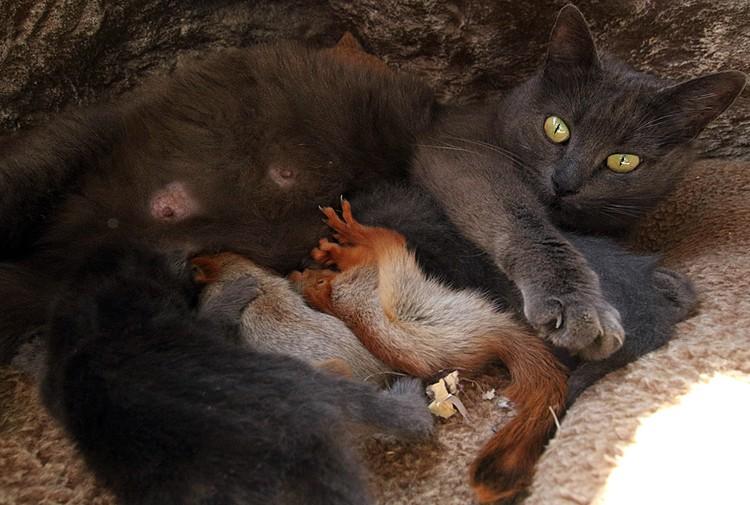 Кошка и ее дети чувствуют себя прекрасно
