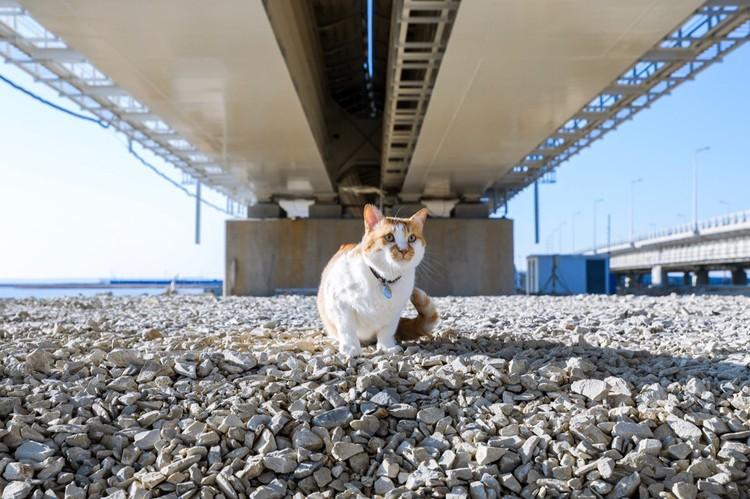 Везде должно быть гладко! Фото: кот Моста/VK