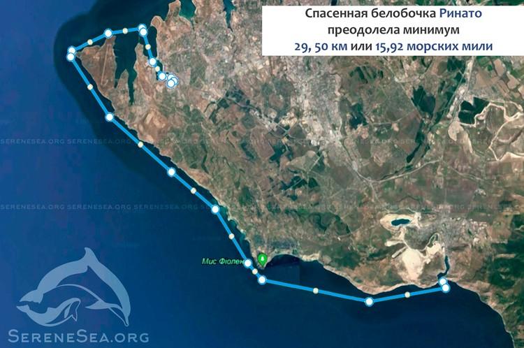 Дельфин приплыл из Камышовой бухты в Балаклаву. Фото: ЦИСРММ «Безмятежное Море» | Serene Sea